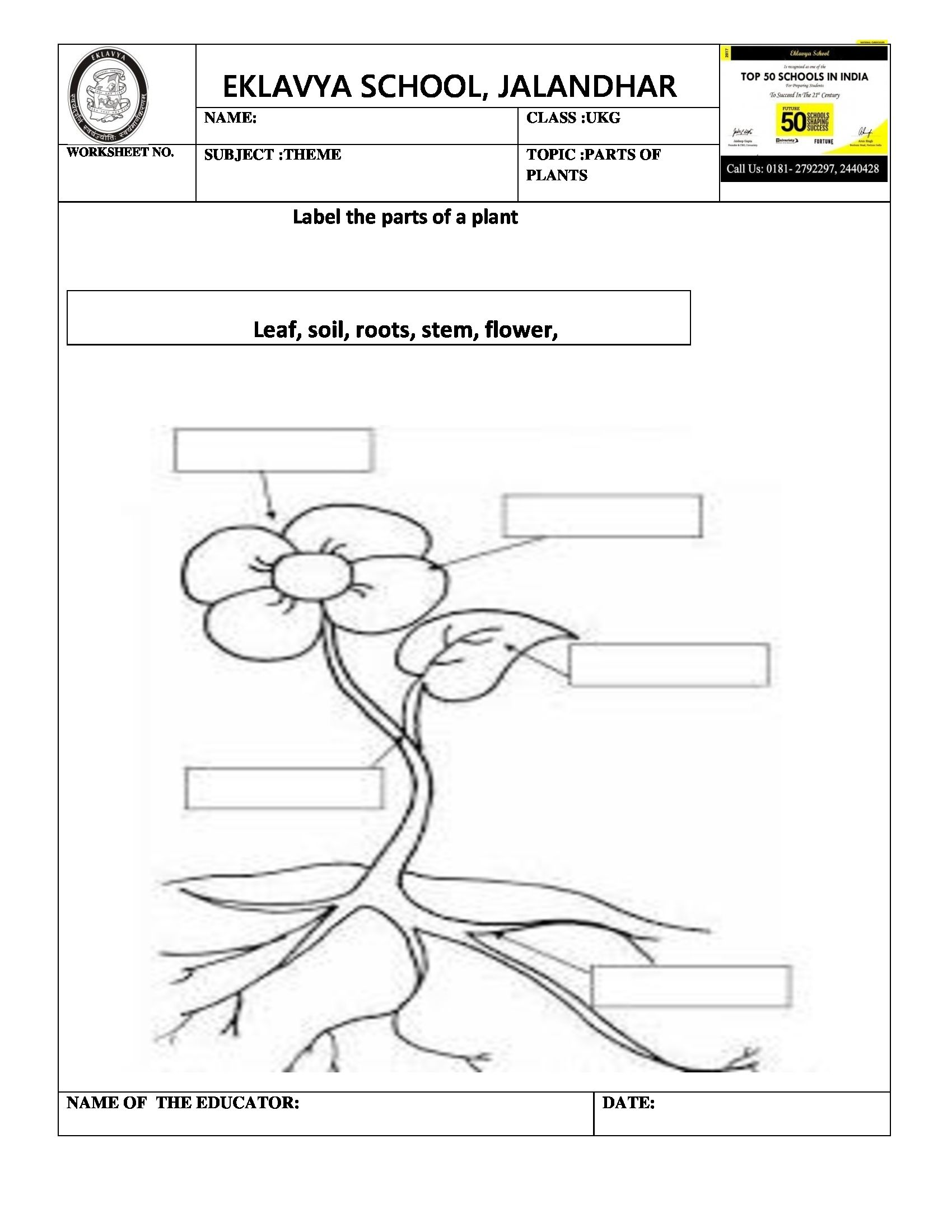 Worksheet On Parts Of Plants