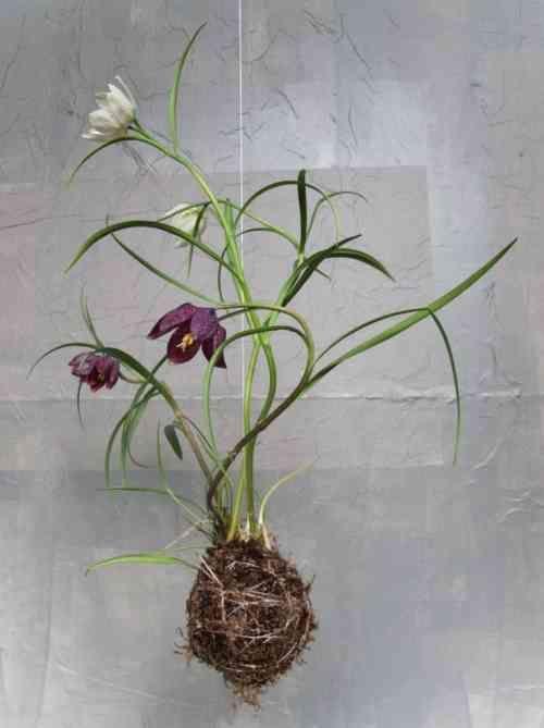 art floral et jardin suspendu