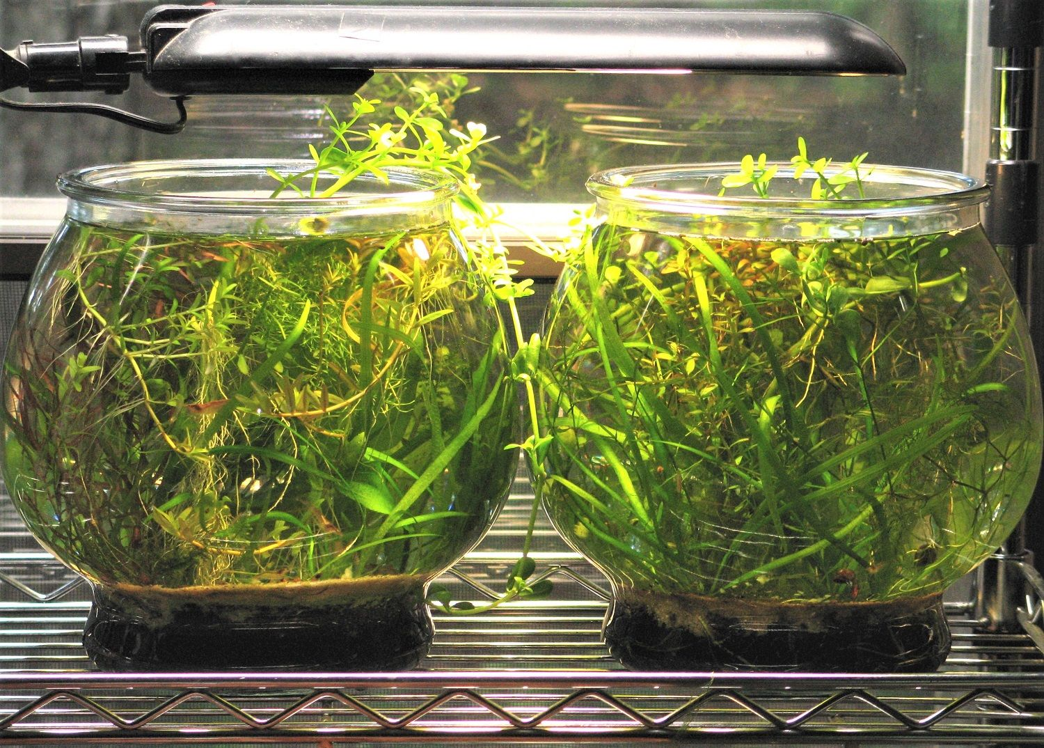 Article On Setting Up Small Planted Tanks For Pet Shrimp Pet Shrimp Shrimp Tank Planted Aquarium
