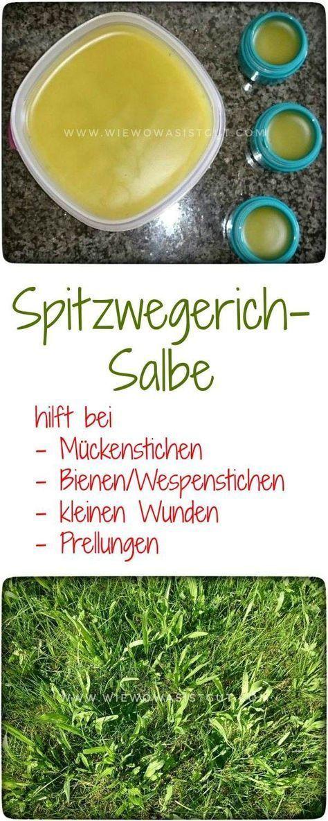 Salbe aus Spitzwegerich gegen Insektenstiche – auch bei Bienen- und Wespenstichen – wiewowasistgut.com