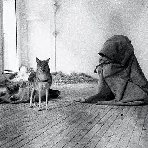 Joseph Beuys - I like America and America likes Me, 1974 #josephbeuys #artcontemporain #performance #artist #contemporaryart #artiste #coyote #masterpiece #love