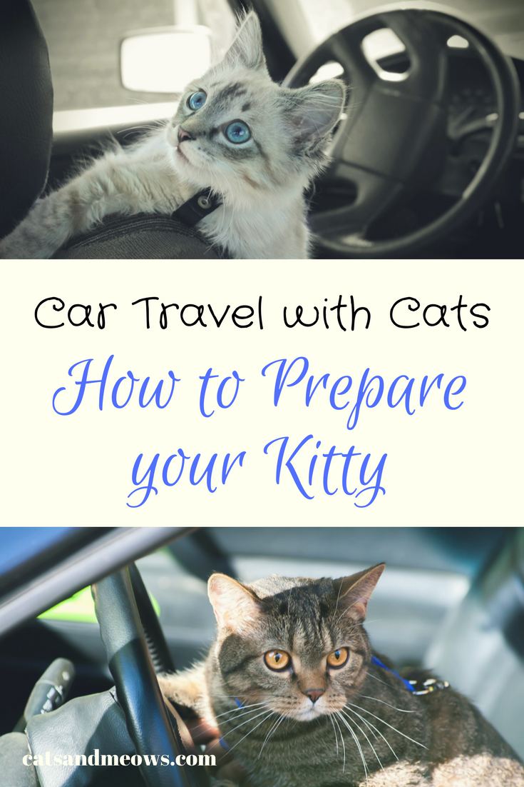 If You Re Planning A Road Trip With Your Cat You Have To Consider Your Cat S Needs When You Re Planning The Trip He Cat Travel Cat Training Cat Having Kittens
