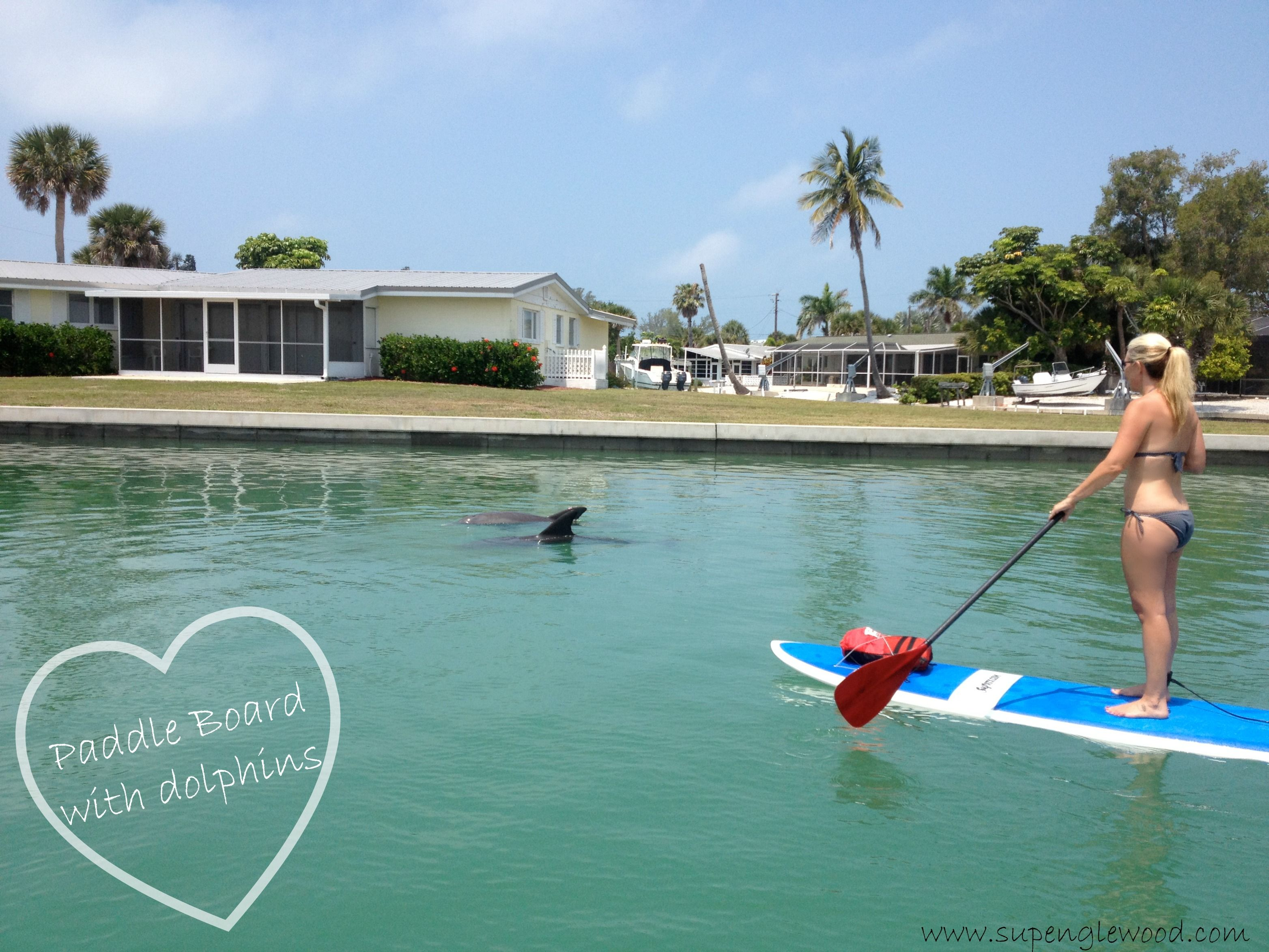 Paddleboard With Dolphins In Their Natural Habitat At