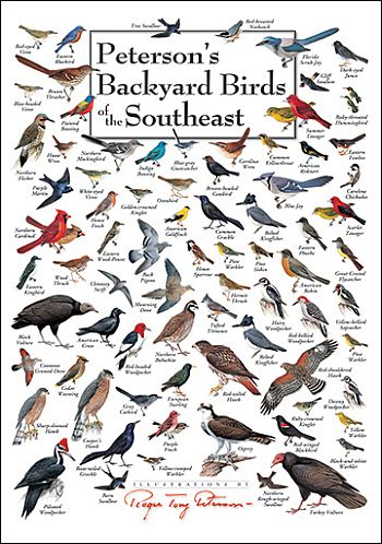 Nature Posters Nature Wall Posters Wild Bird Identification Wall Posters At Fiddle Creek Farms Backyard Birds Birds Bird Identification