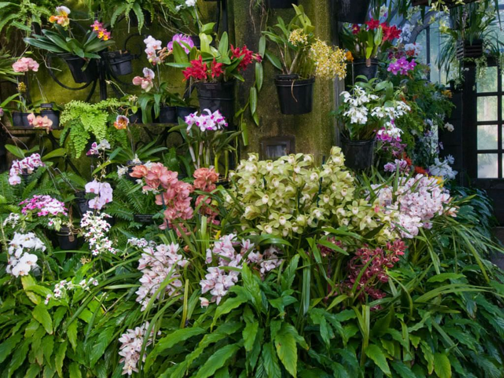 How to grow orchids indoors houseplants pinterest growing