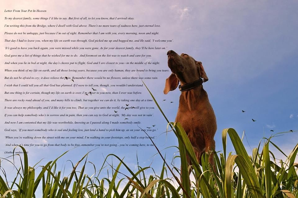 A Letter From Your Pet In Heaven Beloved Dog Rainbow Bridge I Love Dogs