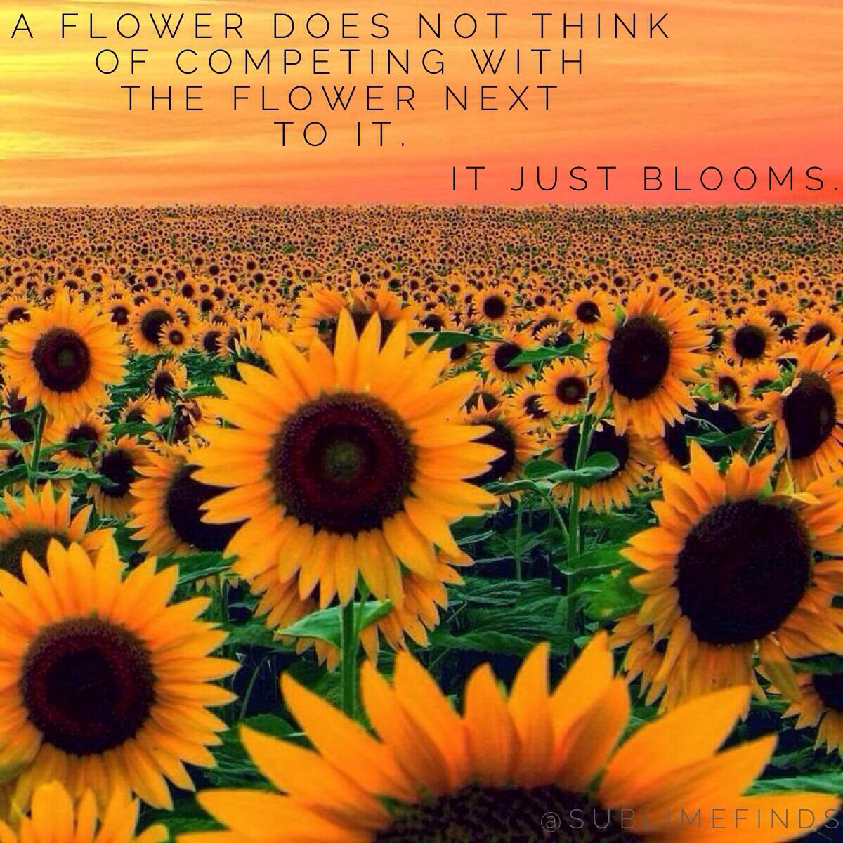 A flower does not think of competing with the flower next to it. It just blooms. IT JUST BLOOMS.