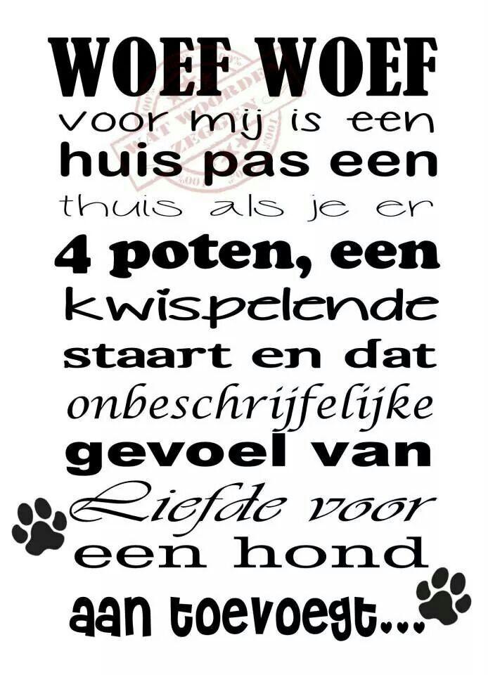 Citaten Over Honden : Spreuken en teksten leuke pinterest