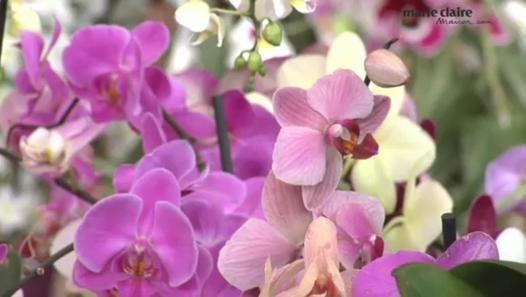 sous ses airs d licats l orchid e est une plante assez r sistante qui ne demande pas autant d. Black Bedroom Furniture Sets. Home Design Ideas