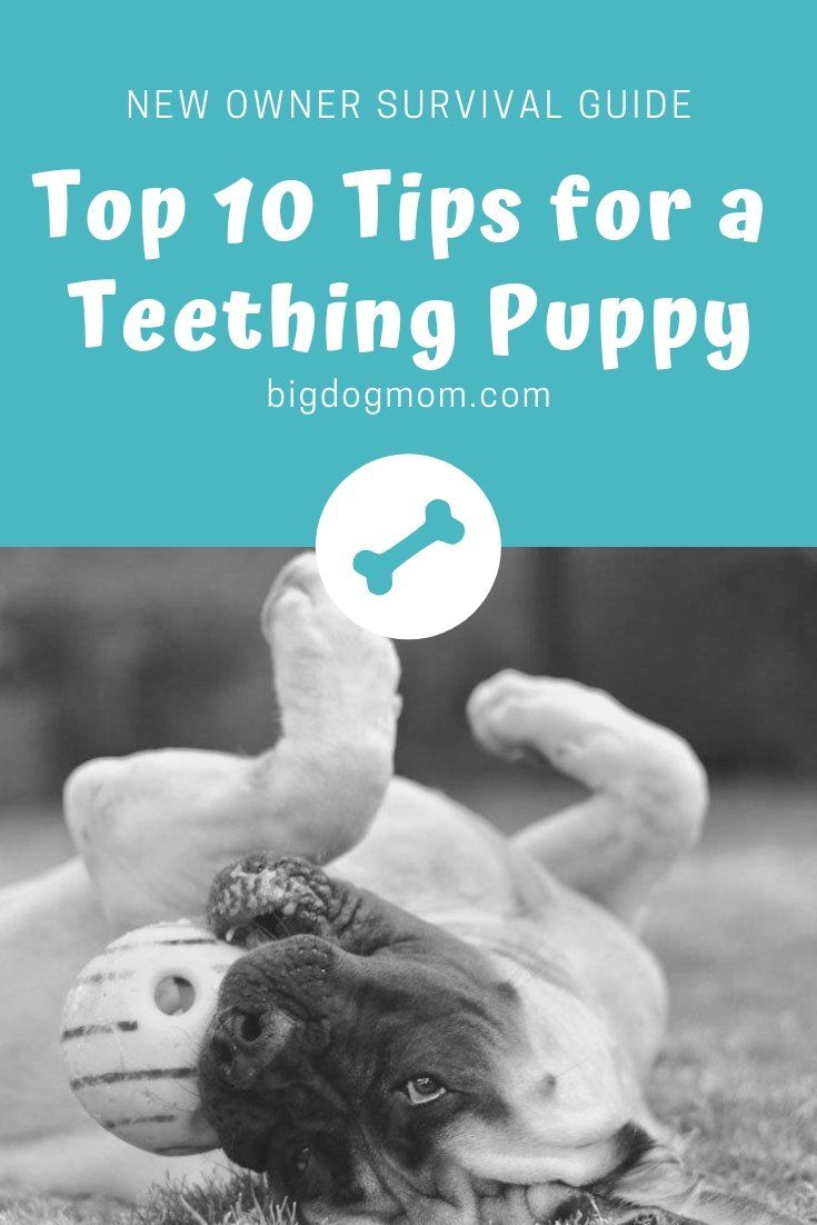 Puppy Teething 101 Ultimate Survival Guide for Large