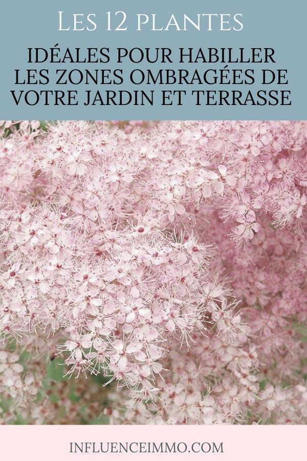 Photo of Die 12 IDEALE zum Ankleiden der schattigen Bereiche Ihres Gartens und Ihrer TERRASSE