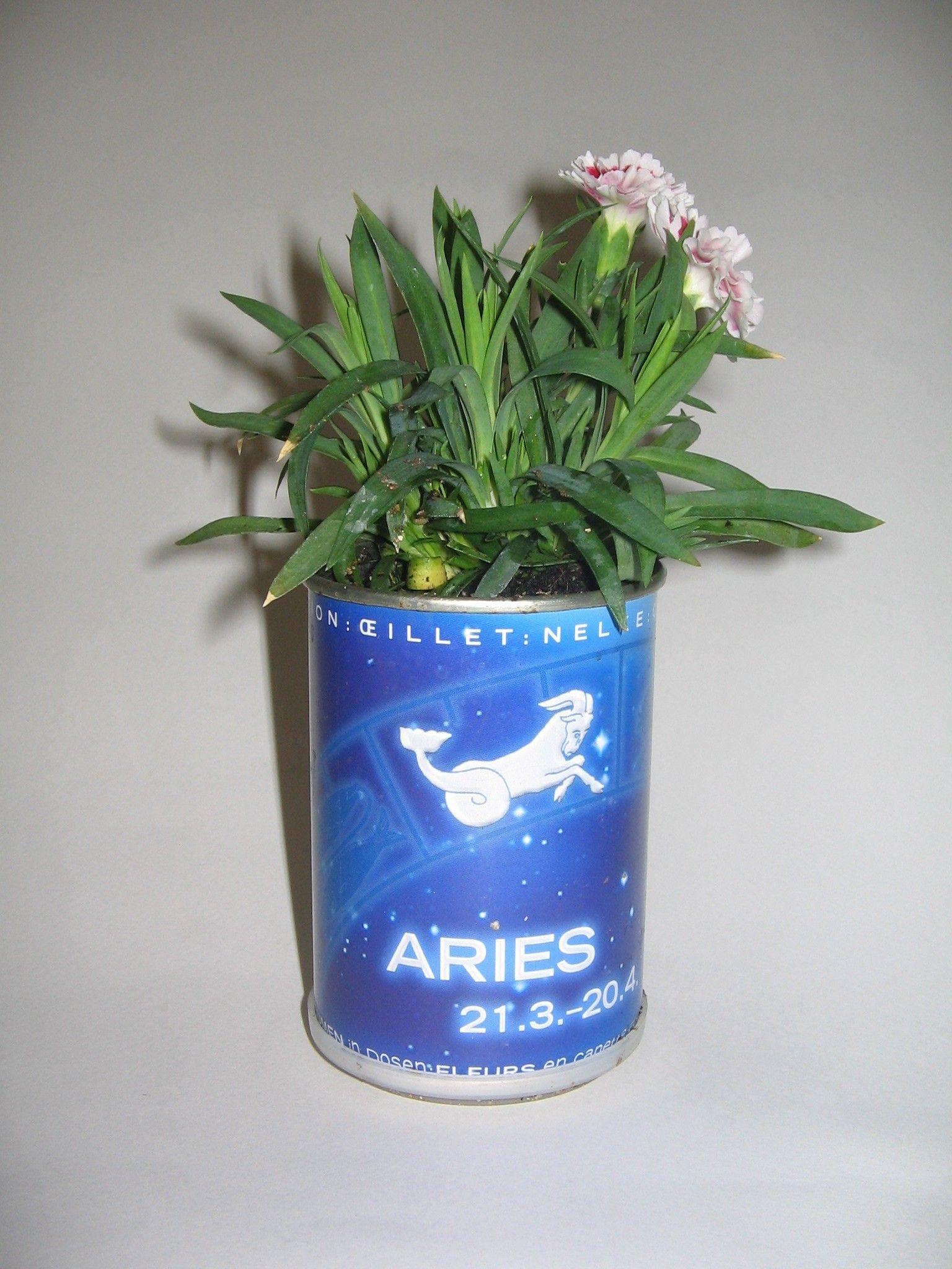 Microgiardini Aries! Il fiore che lo rappresenta è il