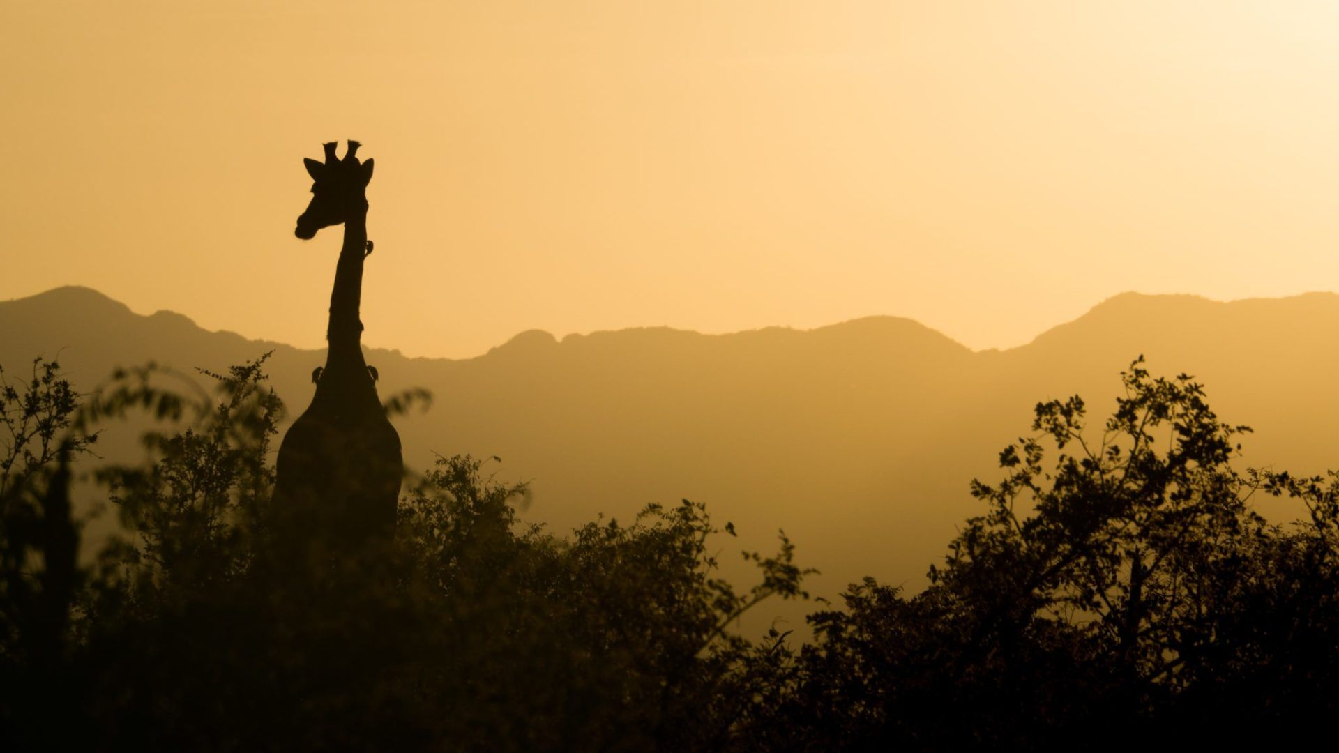 Paysages De L Afrique Du Sud 34 Afrique Centrale Afrique Animaux Afrique