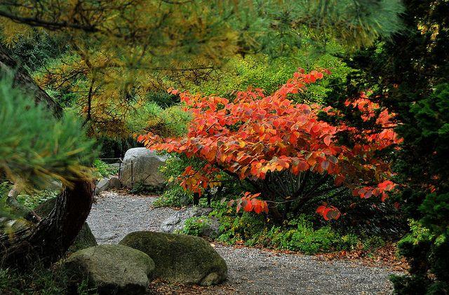 Witch Hazel Tree For Flowers In February Witch Hazel Tree