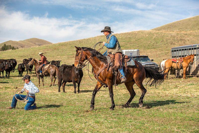 _5D32003_edited1 American paint horse, Horses, American