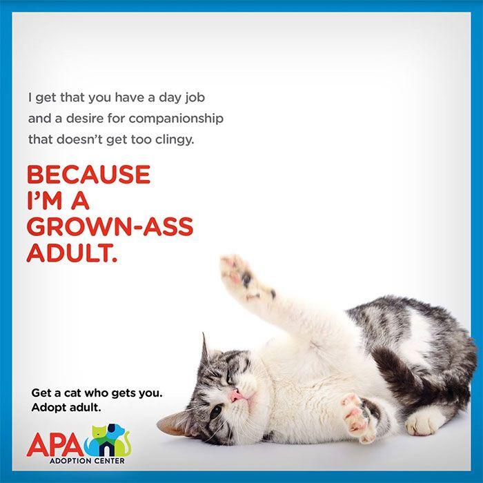 Adoption Center Creates Hilarious Posters To Inspire People To Rescue Senior Pets #petadoption