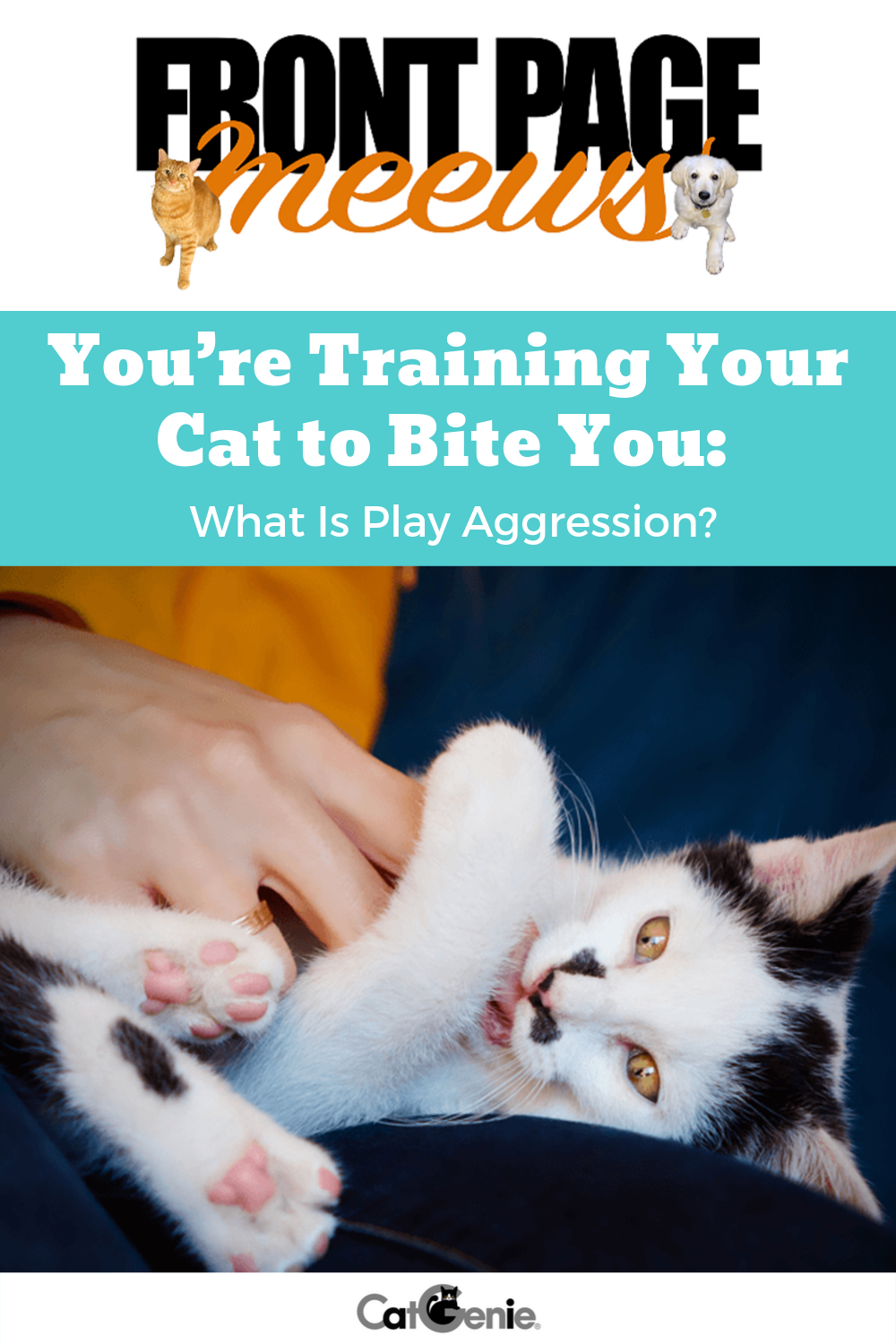 You Re Training Your Cat To Bite You What Is Play Aggression In 2020 Cat Behavior Aggressive What Is Play