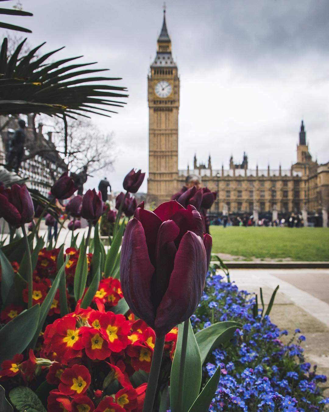 Floral Ben  #urbanphotography  #mycanon #canon  #londonwide #cityofcities #citypicz  #igerslondon  #lovegreatbritain #shutup_london #stelleruk #super_holland #thisislondon #timeoutlondon #huffpostgram #ink361_europe #liveauthentic #livefolk #passionpassport #streetdreamsmag #toplondonphoto #visitlondon #LDNstreets by mumhad1ofthose