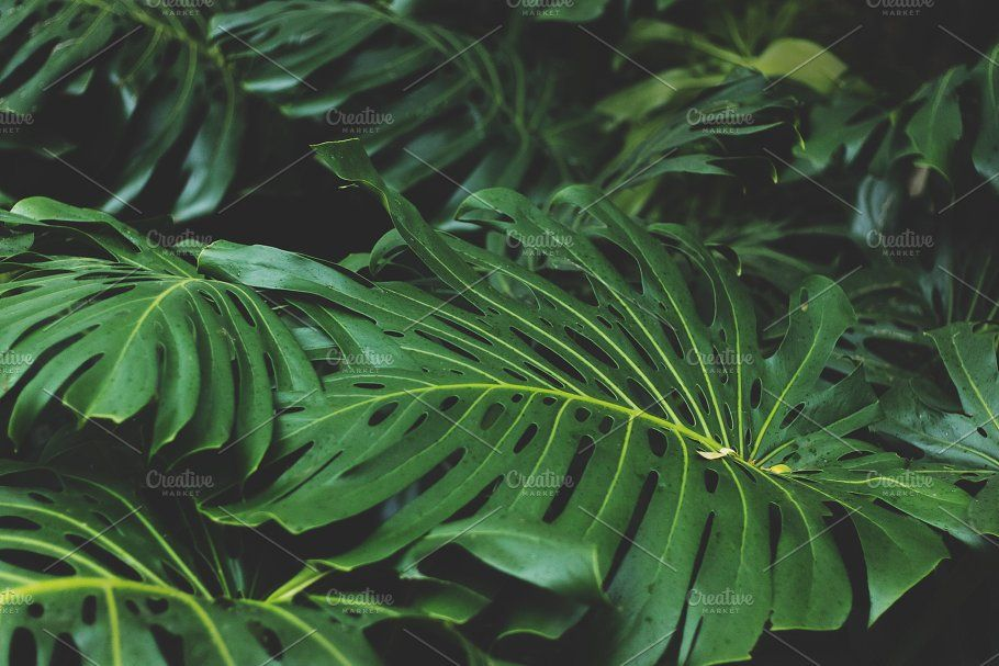 Monstera Jungle Leaves Leaf Photography Tropical Tree Leaves Tropical leaves and flowers doodles drawing ideas/ bullet journal dood. jungle leaves leaf photography