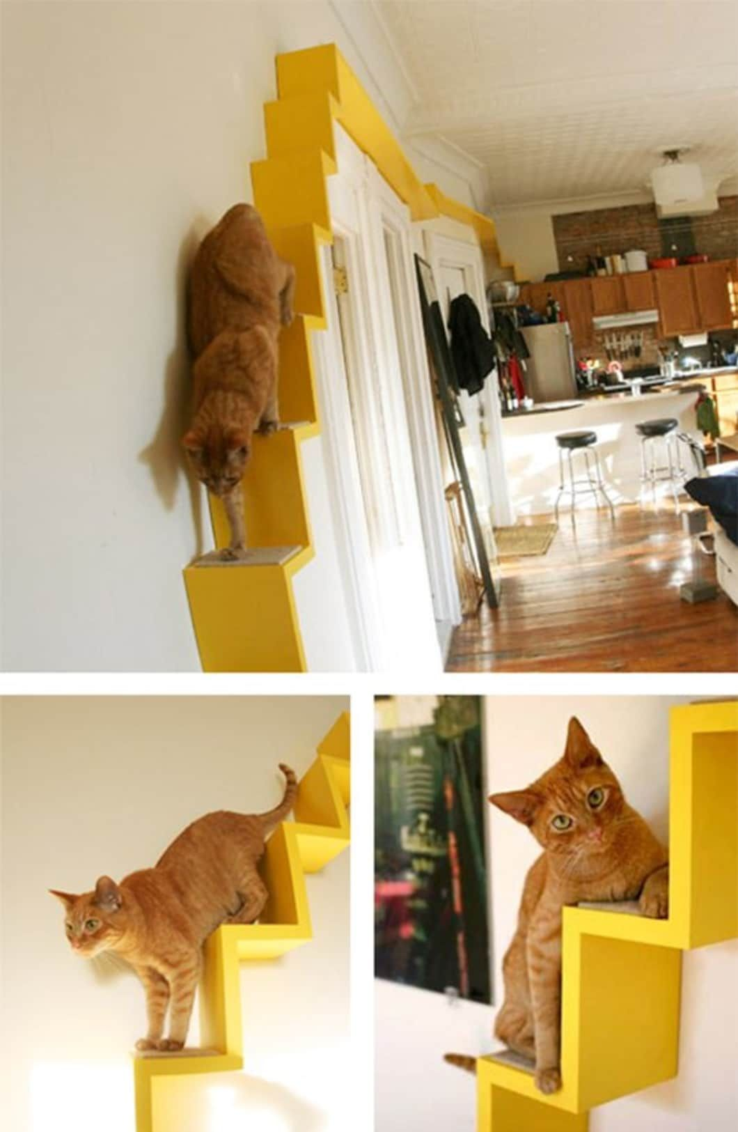 Serious DIYs for People Who Really Really Love Their Cats ...