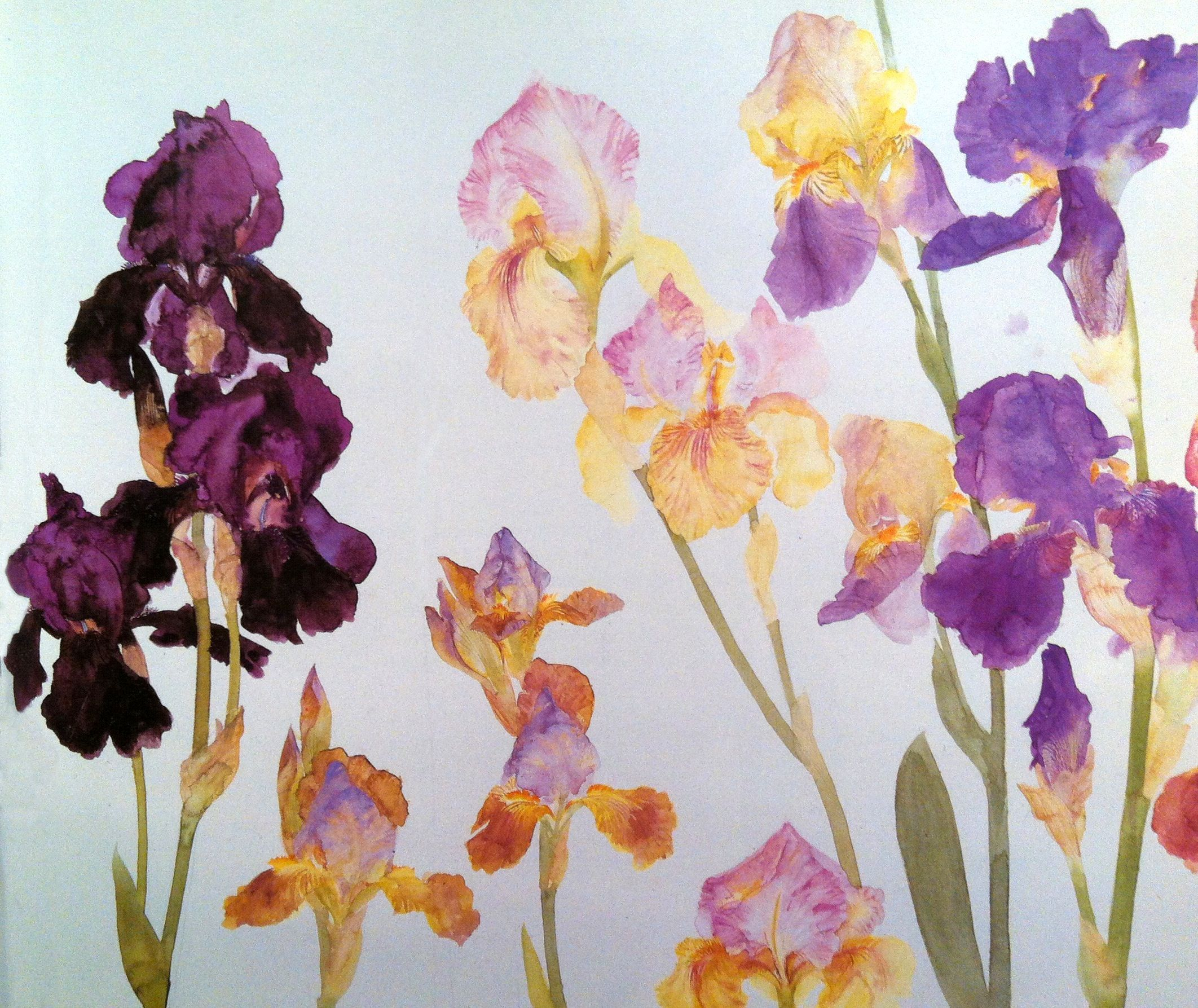 elizabeth blackadder paintings