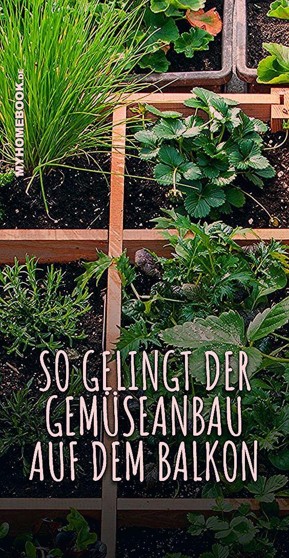 Photo of So gelingt der Gemüseanbau auf dem Balkon – myHOMEBOOK