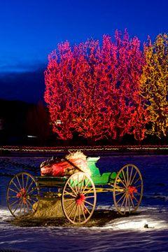 a64474b765640690314ec67f2062c64f - Denver Botanic Gardens Christmas Lights Chatfield