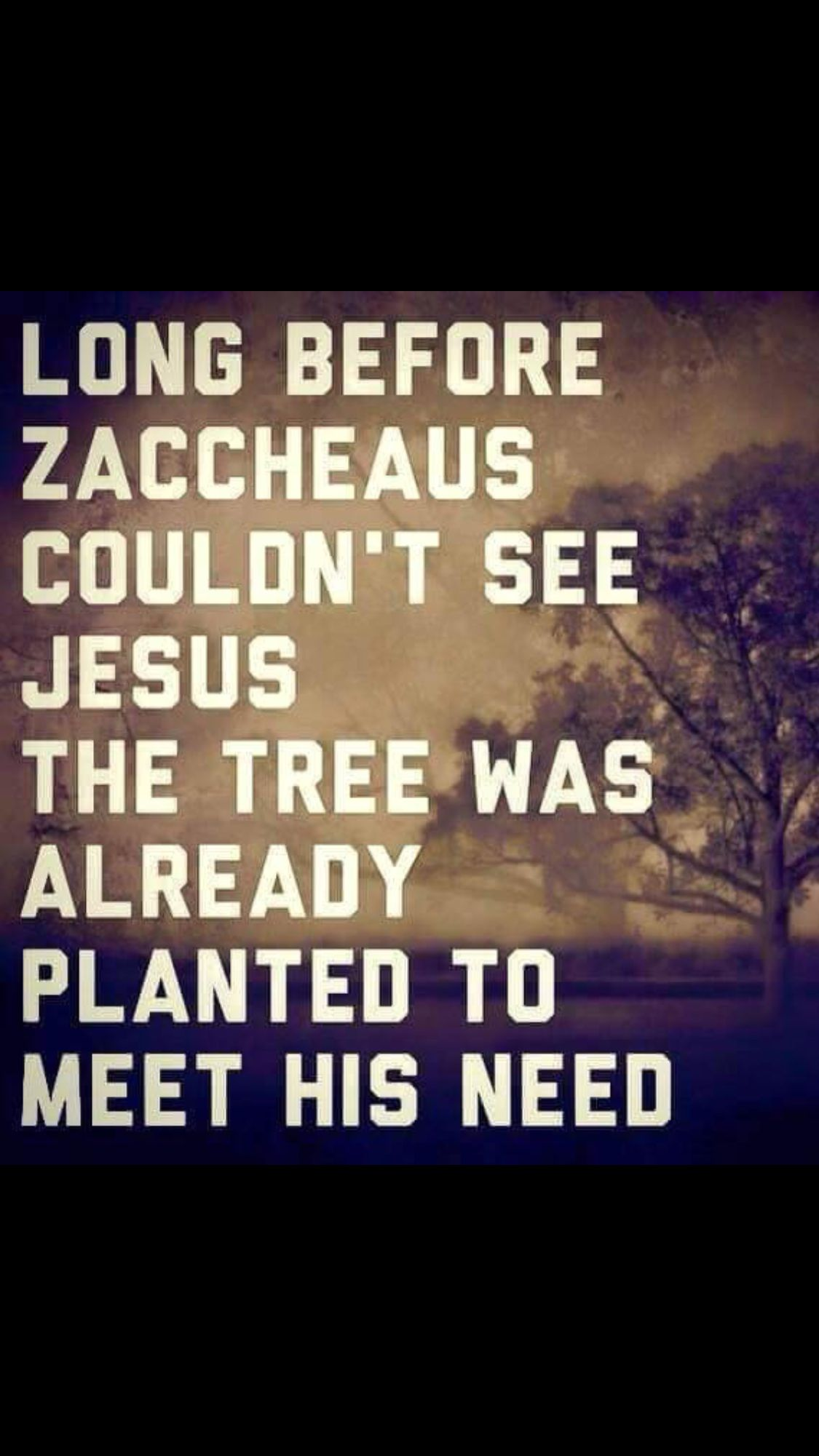 I love this so much beautiful quotes and verses pinterest long before zacchaeus couldnt see jesus the tree was already planted to meet his need god knows find this pin and more on beautiful quotes altavistaventures Gallery