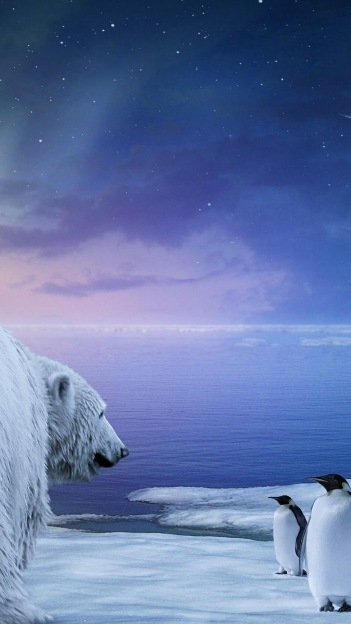 Download Wallpaper 720x1280 Polar Bear, Penguin, Northern