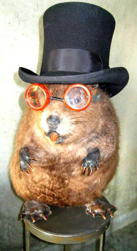 Winston Churchill the Beaver as in my apartment.