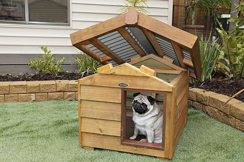 This Sweet Pug Doesn T Look Too Happy In This Doghouse Perhaps He