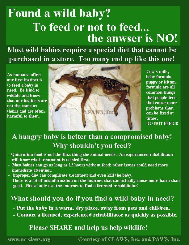 Don T Feed Me Wildlife Rehabilitation Wildlife Biologist Save Wildlife