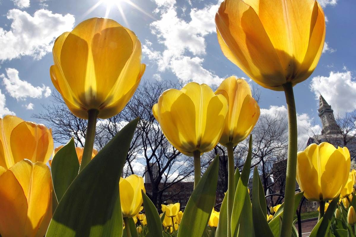 Spring flowers may arrive as much as three weeks earlier over the next century as climate change drives an earlier end to winters.