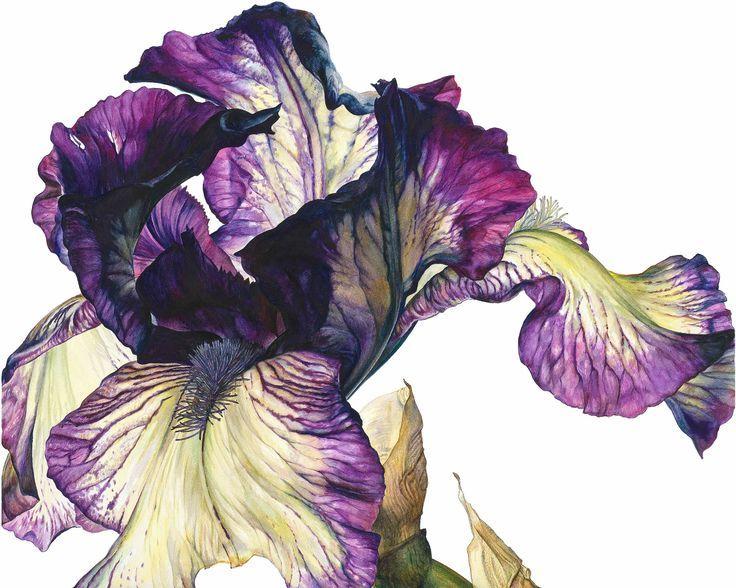 art Rosie Sanders, flower