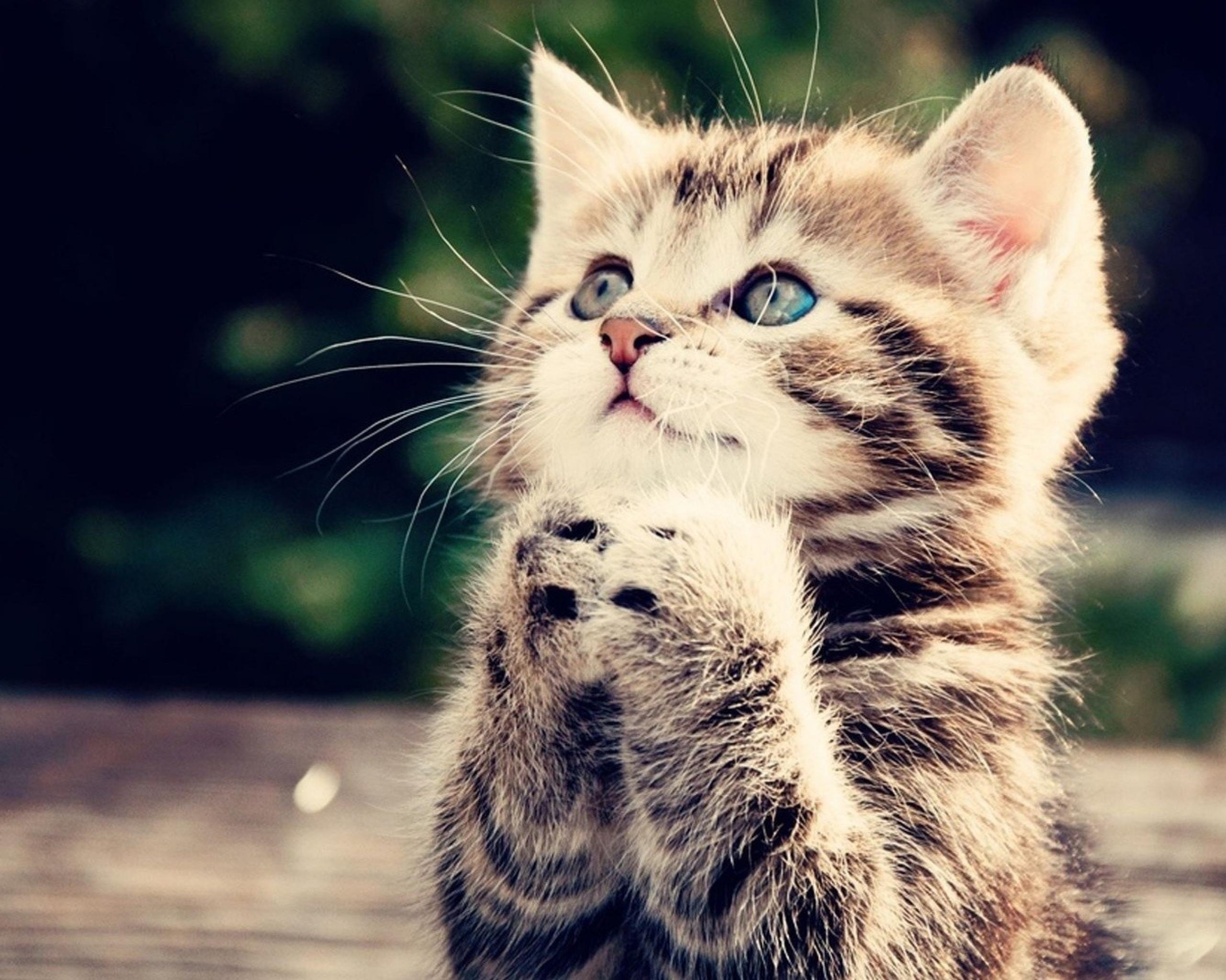 The Purr fect Start Preparing For Your New Kitten
