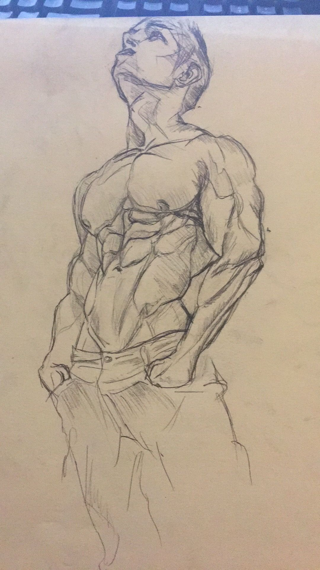 Muscle study in graphite