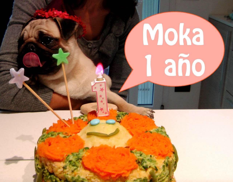 Cómo Hacer Torta De Cumpleaños Para Perros Pastel Para
