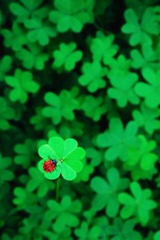 Iphone Wallpaper St Patrick S Day Tjn Ladybug Four