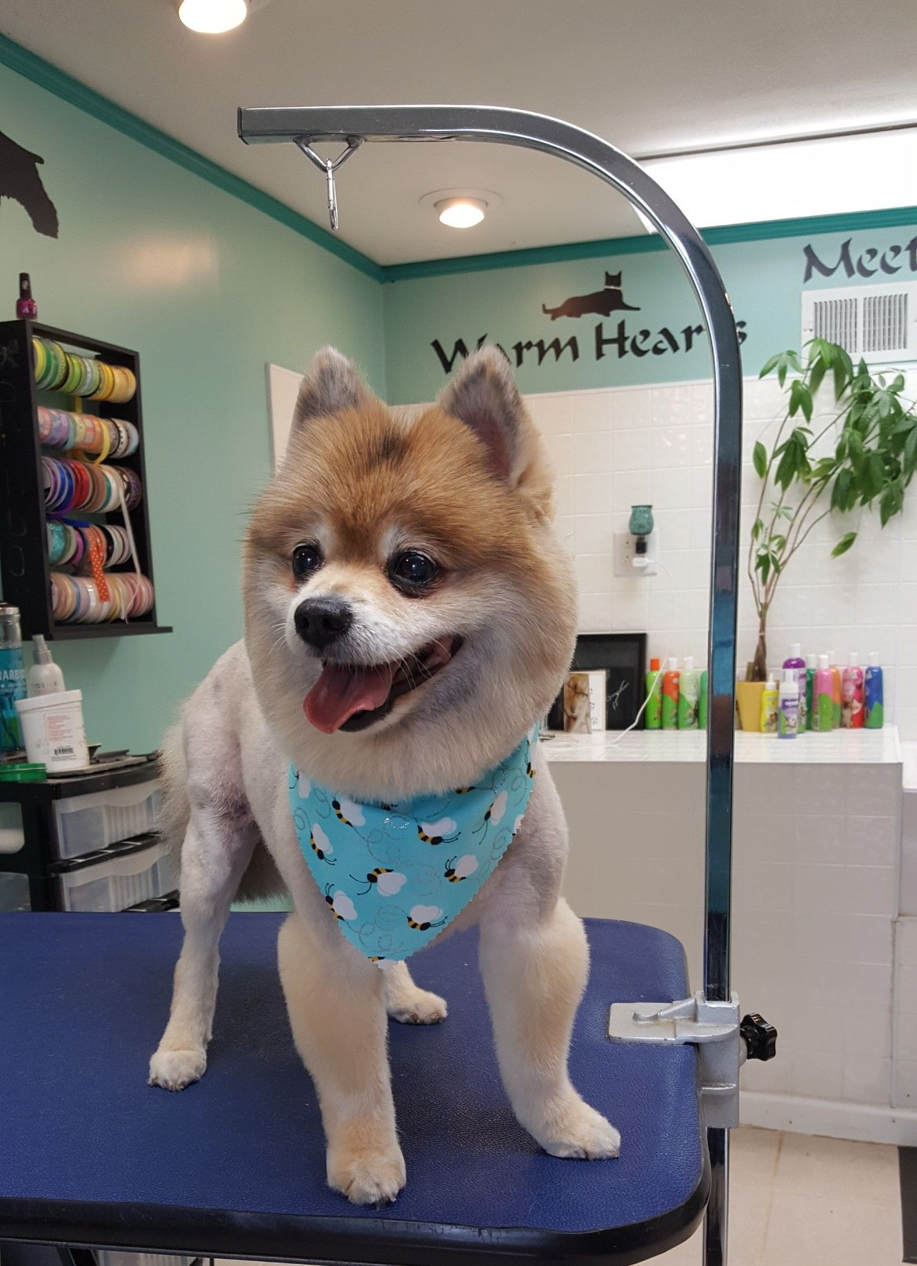 Pin By Dogwood Grooming Spa Llc On Happy Clients Corgi Dogs