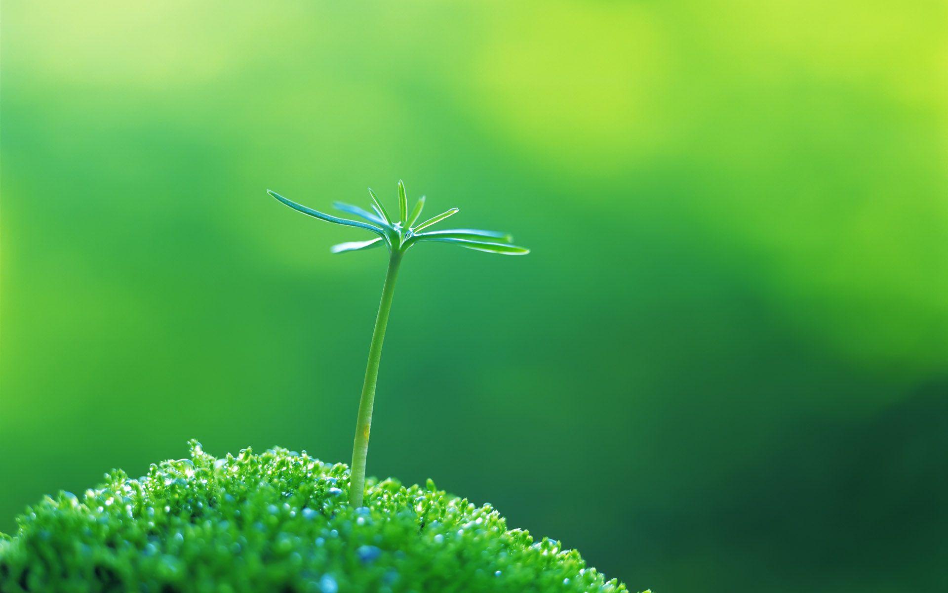 Green Close Up Nature Plants Macro Wallpaper 1920x1200 8523