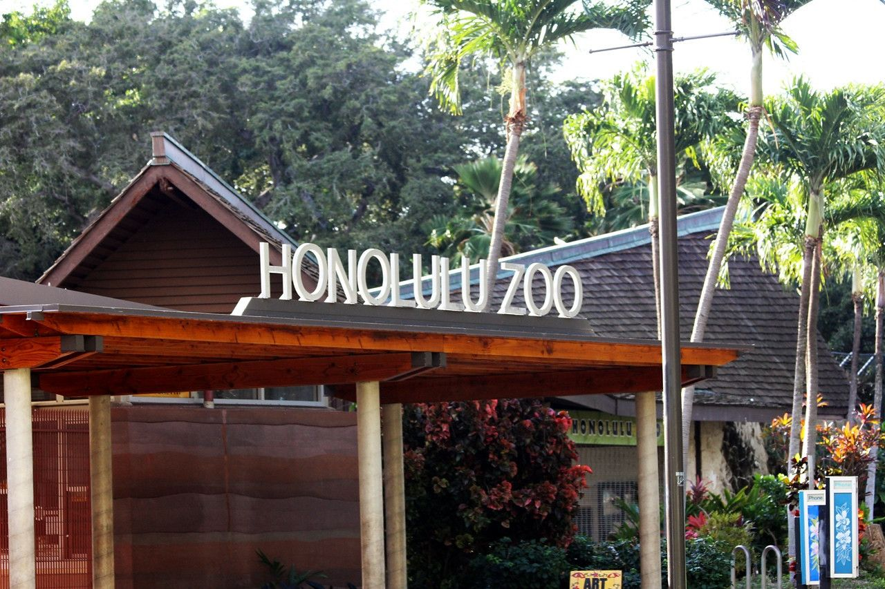 TRIP TO THE ZOO - Kaneahi in 2019   Honolulu zoo, Honolulu hi, San diego zoo