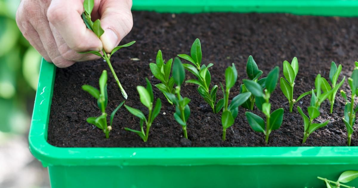 vermehrung natur garten pflanzen garten und gartenpflanzen. Black Bedroom Furniture Sets. Home Design Ideas