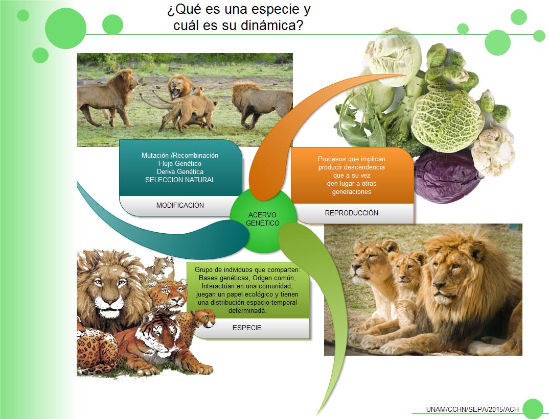 Infografía que nos permite trabajar el concepto de especie biológica ...