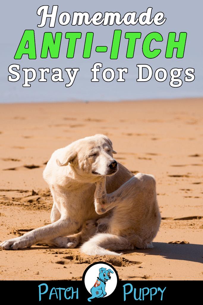 Homemade Anti Itch Spray For Dogs Easy 3 Ingredient Recipe Dog Anti Itch Spray Dog Dry Skin Remedy Dog Dry Skin