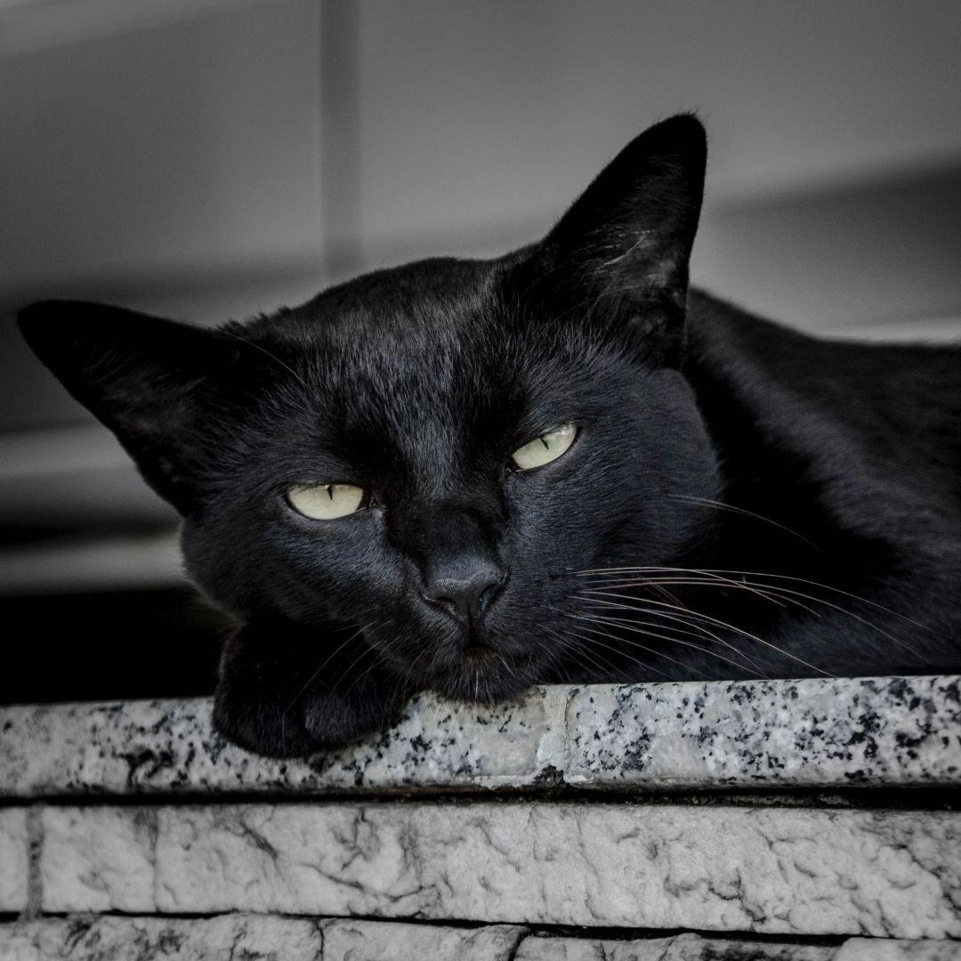 Happy Hanukkah Cat Blanket Black Cat