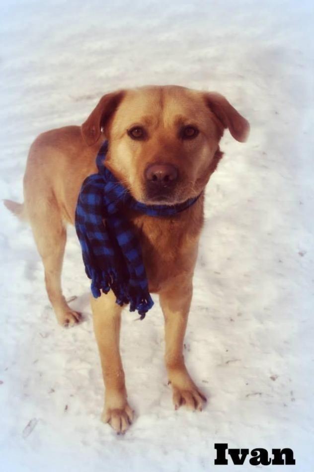 Adopt 10 Ivan 1 Rescued On Dog Pounds Dog Adoption Dog Help