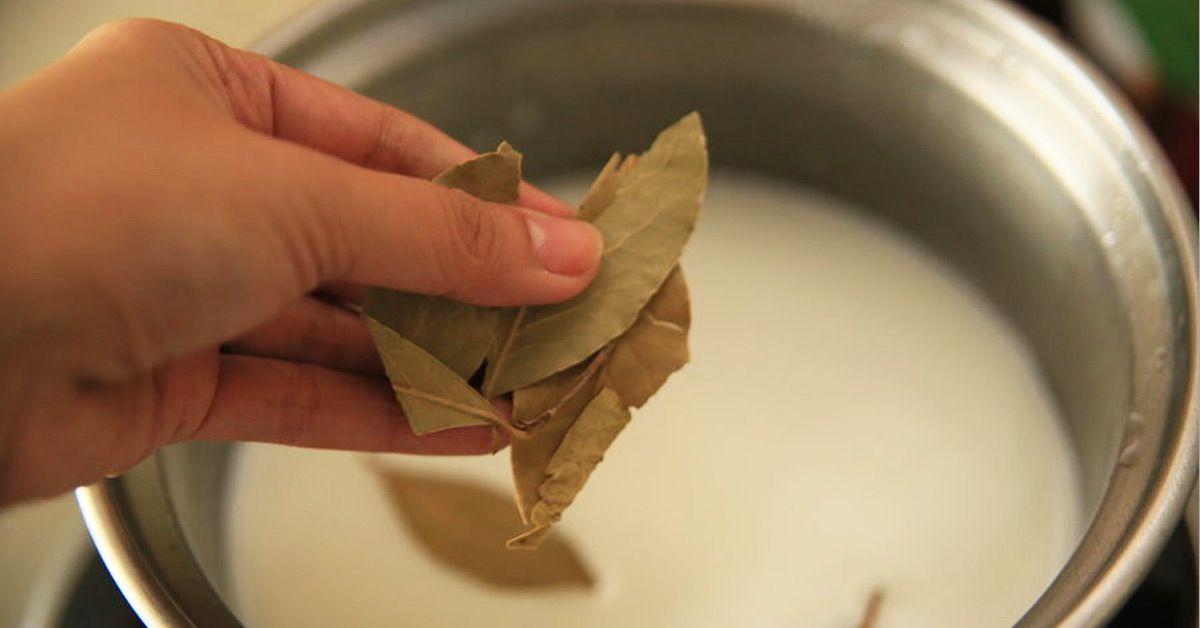 Le laurier : une plante aromatique aux milles vertus