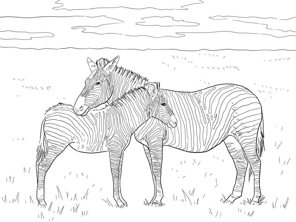 ausmalbilder zum ausdrucken kostenlos zebras