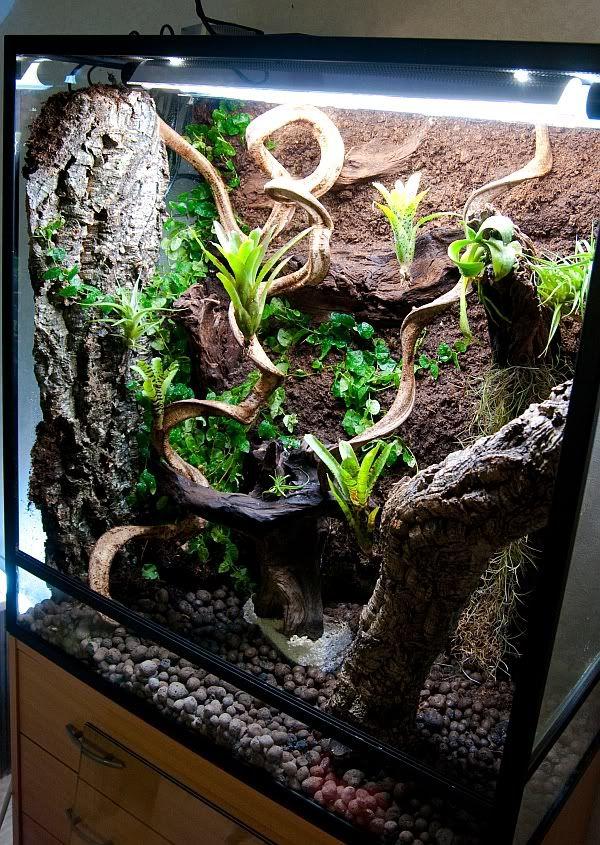 vivs tanks terrariums geckos unlimited enclosures and vivaria vivarium terrarium gecko. Black Bedroom Furniture Sets. Home Design Ideas
