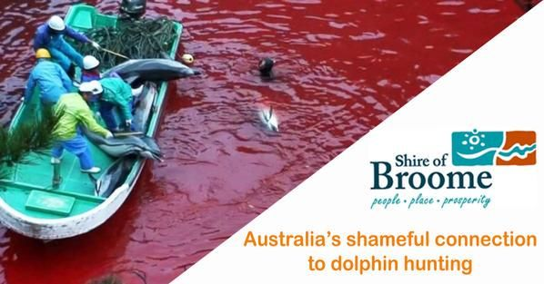 @ShinjuMatsuri  http://www.theguardian.com/environment/2015/aug/21/scottish-town-cuts-twinned-link-to-faroe-islands-over-whale-killings …  http://elizabethbatt.com/2014/12/broome-australia-its-time-to-make-a-stand-for-taiji-dolphins/ …  #Broome/#Taiji #ShinjuMatsuri #Tourism #OpGrindini
